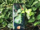 Bộ ảnh chìm đắm trong màn hình vô cực của bộ đôi Galaxy S8/Galaxy S8+